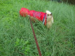 草むら怪しいハル