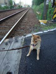 線路こわいよ。。