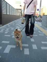 ご機嫌散歩