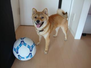 サッカー楽しすぎ