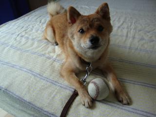 ボールもってく!