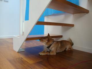 気になる階段