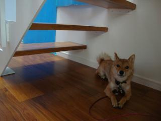 よっとコワイ階段