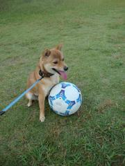 サッカーもっと!