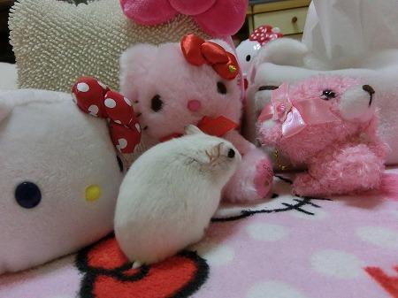 ピンクのキティちゃん!