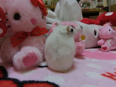 ピンクのくまちゃん~