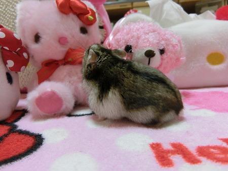 あら~ ピンク!