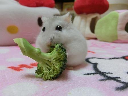 新鮮お野菜~