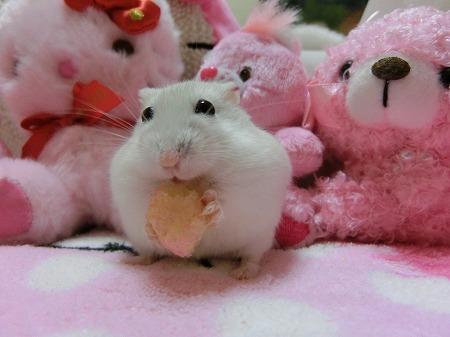 ピンクでしゅ!