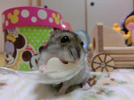 お豆腐みっけた~!