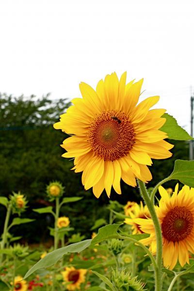 IMG_1441_convert_20100817134938.jpg