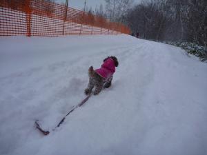 ペットと乗鞍雪遊び