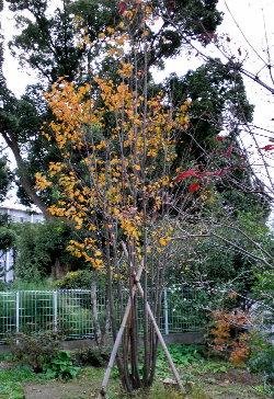 庭で一番大きな木