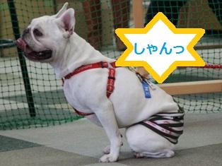 BUHI会 大輔くん