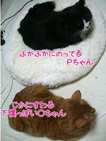 200912041.jpg