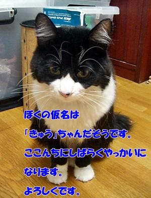 201006145.jpg
