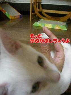 201008135.jpg