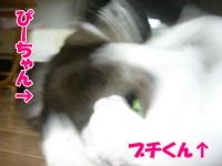 201008255.jpg