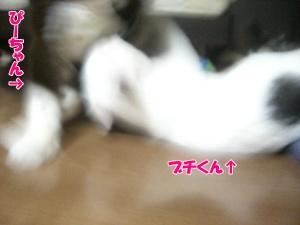 201008257.jpg