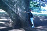 この木何の木2