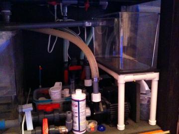 餌付け水槽設置