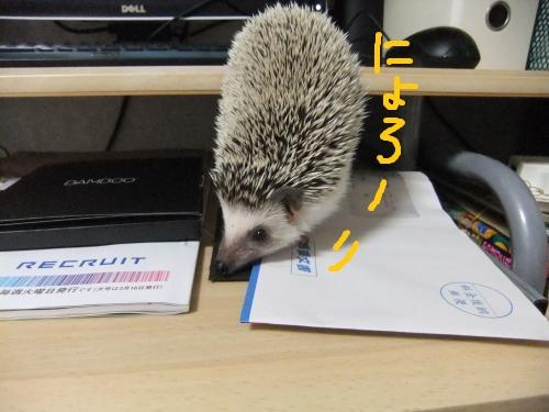 DSCF1070_convert_20100417143506.jpg