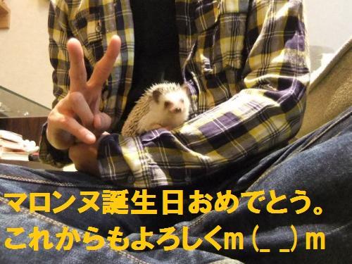DSCF2572_convert_20101123180843.jpg