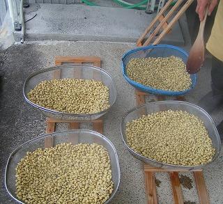 煮た大豆を冷ます