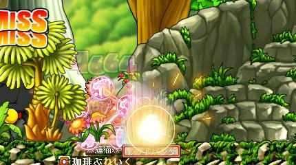 Maple002_20100428171917.jpg
