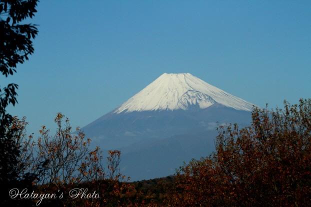 もみじ林富士見台から1a