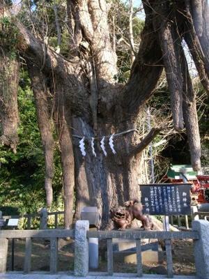 銀杏の神木