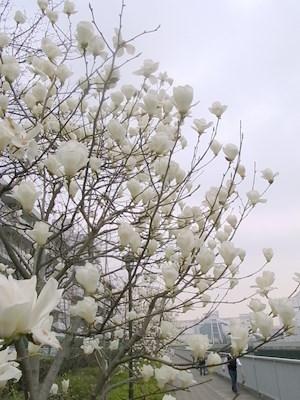 咲き乱れてます