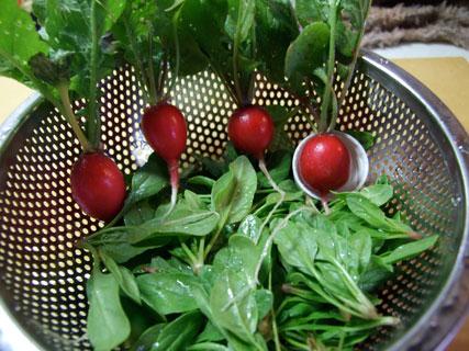 2010.5.24初収穫