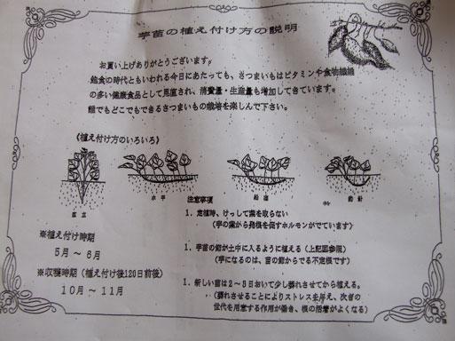 2010芋苗の説明