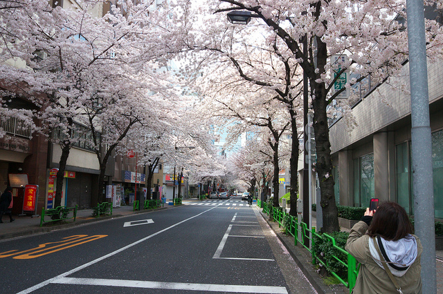 茅場町桜アーチ