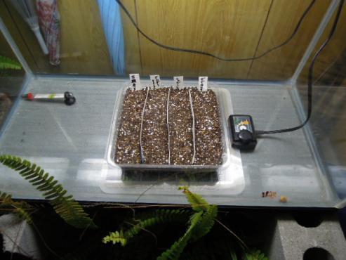 畑を発芽器にセッティング