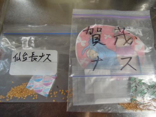 H25 茄子(ナス)の種蒔き