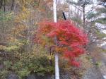2009年11月小菅の湯 019
