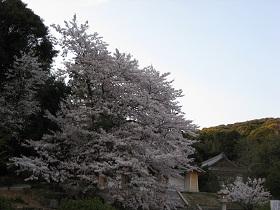 20120408花