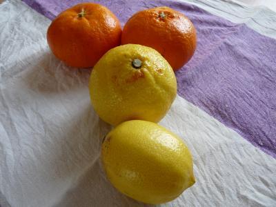 2013.2.21柑橘類5