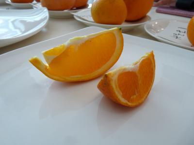 2013.2.21柑橘類2