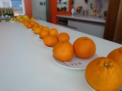 2013.2.21柑橘類