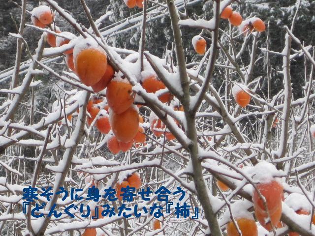 どんぐり柿