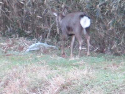 鹿さん発見!!2
