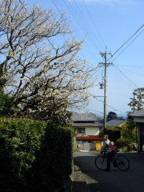 2010_0220浜石0033