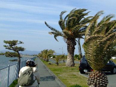 2010_0327ぷれチャリde浜名湖0072