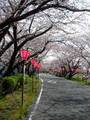 2010_0403花見ポタ?0045