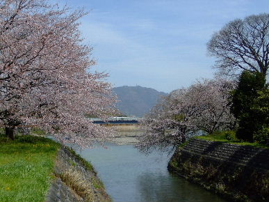 2010_0403花見ポタ?0076