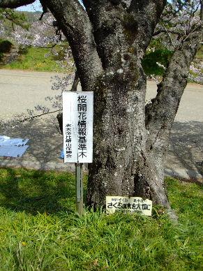 2010_0403花見ポタ?0053