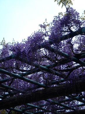2010_0424蓮花寺池の古墳群0050